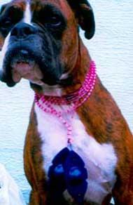 Colette Hazelwood Drag Queen Necklace